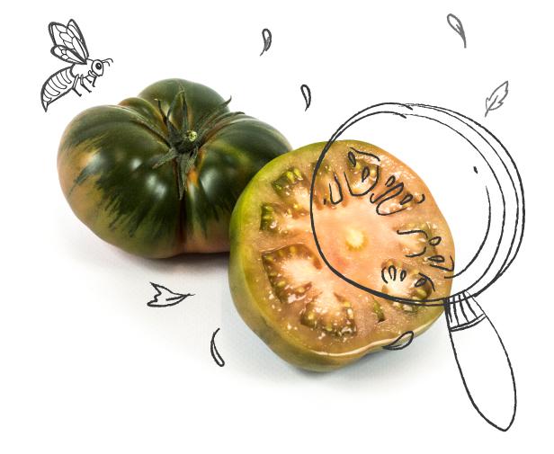 Tomatelover Somos productores de tomates RAF 4