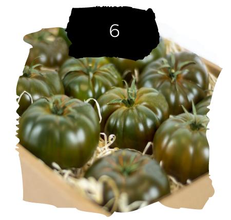 Tomatelover ¿Como es nuestro cultivo de tomates RAF en Almería? 6