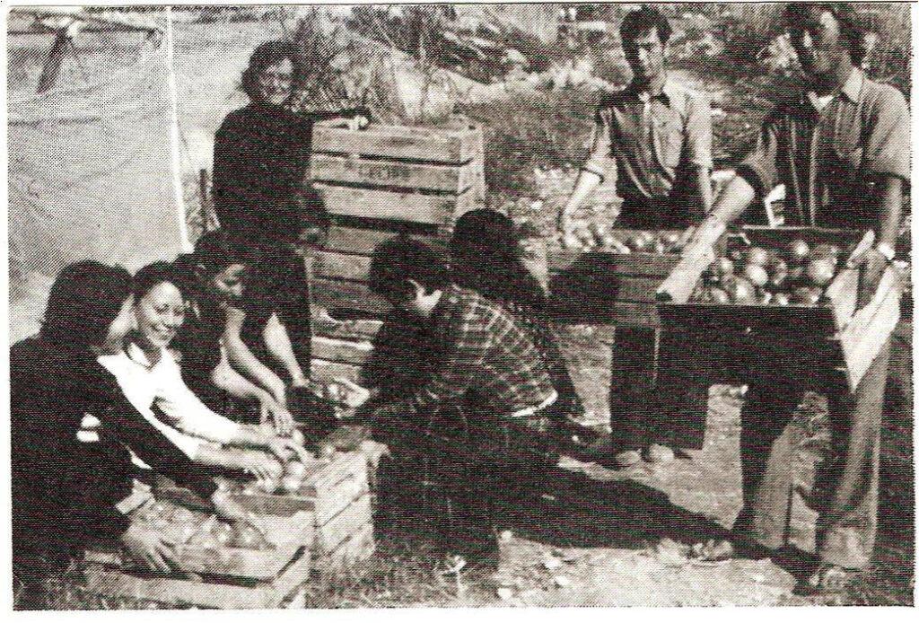 Tomatelover El origen del tomate Raf: desde Francia hasta Cabo de Gata 1