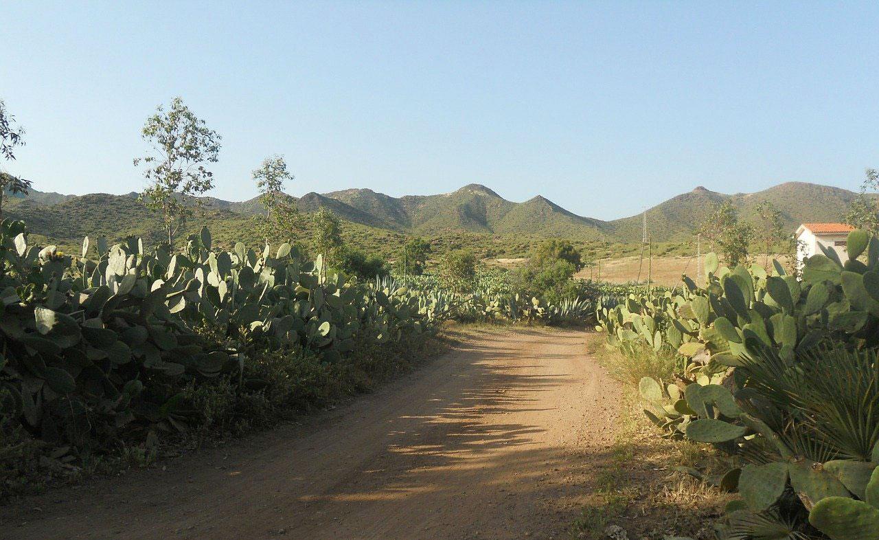Tomate-Raf-Cabo-de-Gata-2